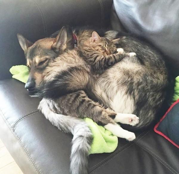 Как собака себе кота выбрала животные, кот, собака