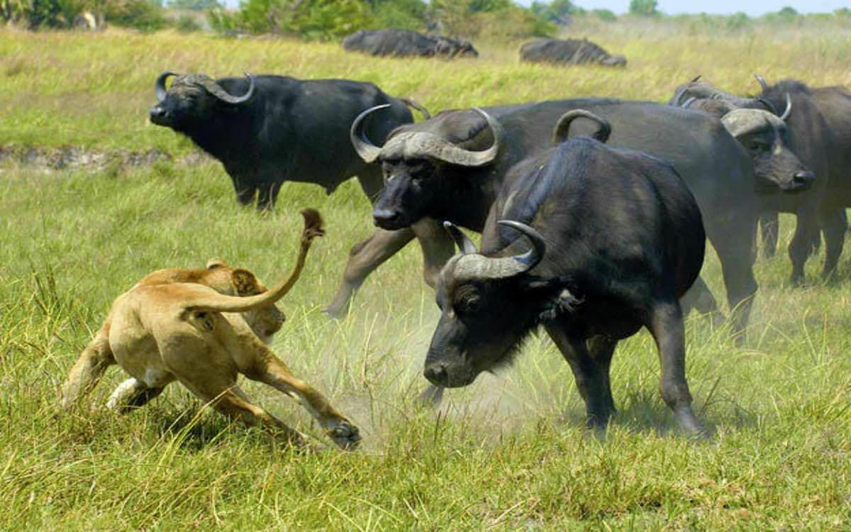 Смертельные животные, которые не прочь убить человека