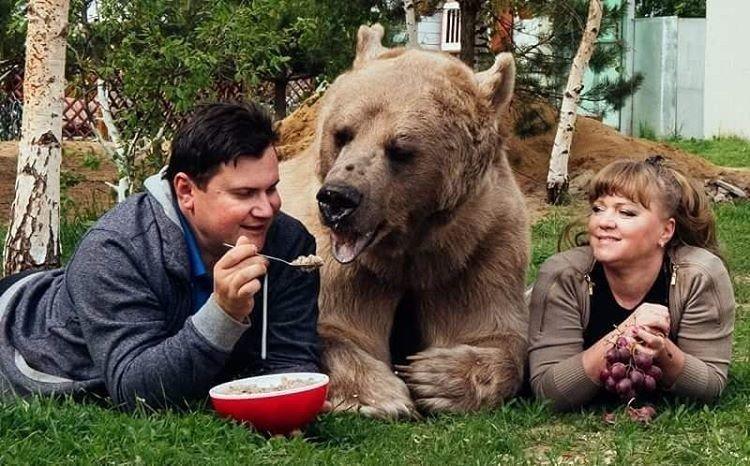Светлана, Юрий и медведь Степан. 25 лет вместе