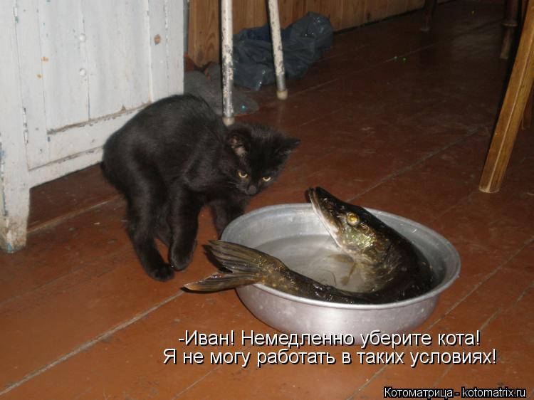 Котоматрица: -Иван! Немедленно уберите кота! Я не могу работать в таких условиях!