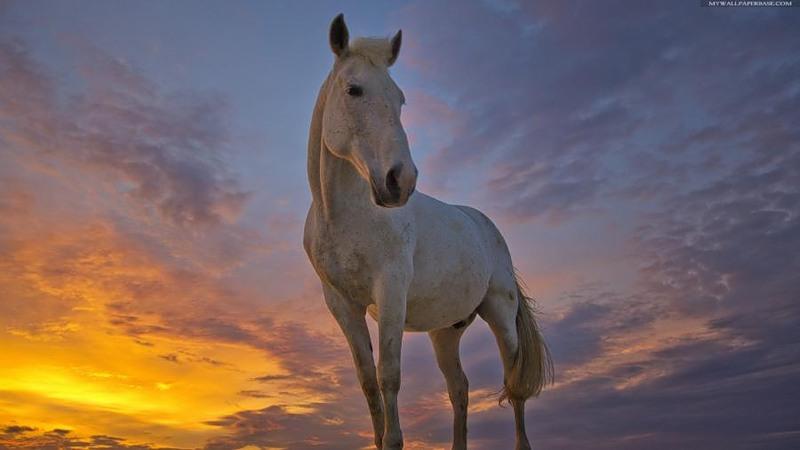 Чего хочет Лошадь или как накрыть стол на Новый Год 2014 — советы астрологов