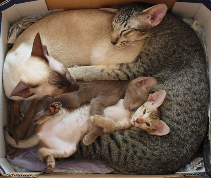 Here's Another Cute Cat Family For You