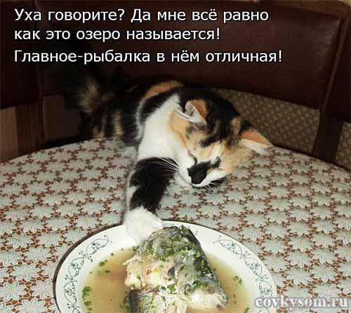 Кулинарные котоматрицы 31 (юмор)