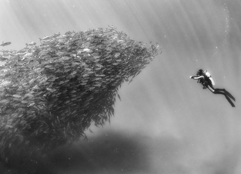 Дайвинг с акулами и другие чудеса «Подводного царства»