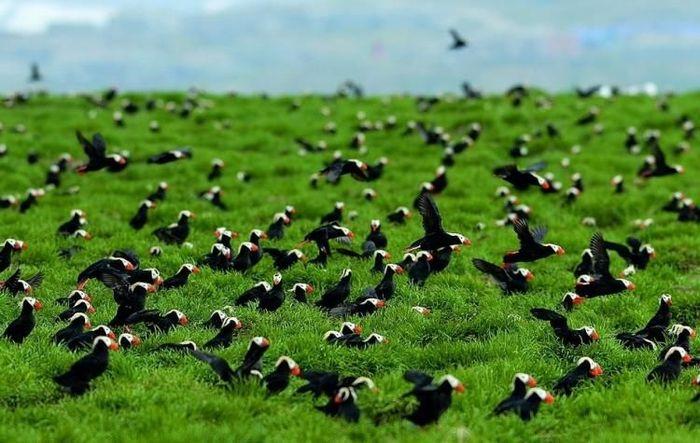 Северные птахи.