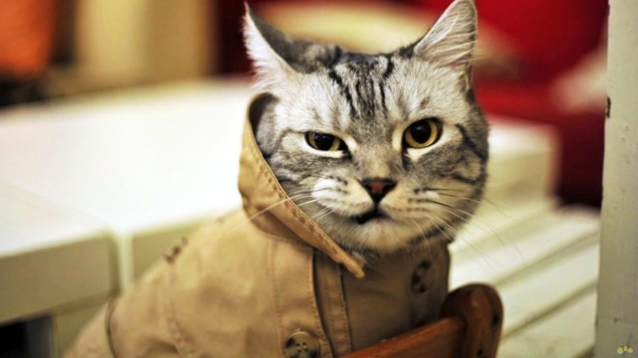 Байки про кошек