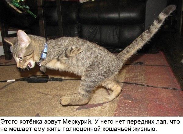 Котенок, который выучился об…