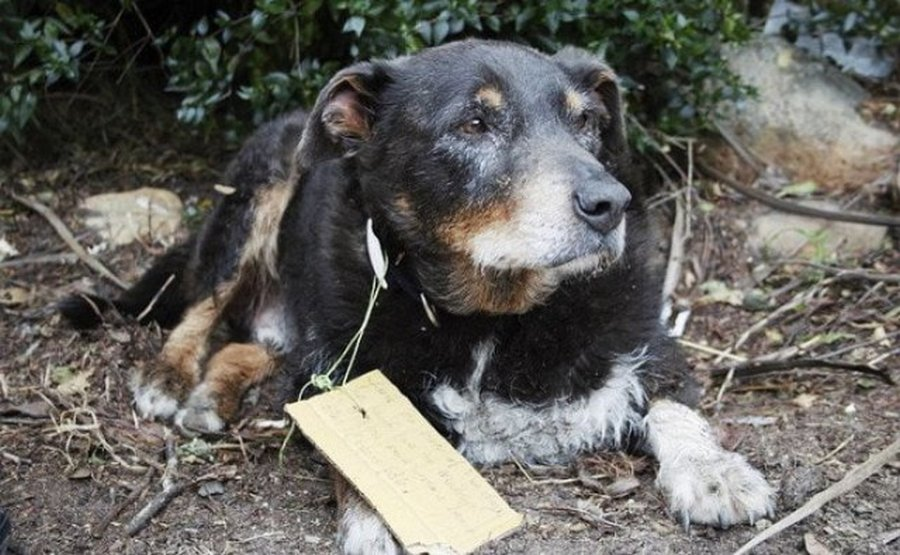 В семье думали, что пес потерялся, а он спасал в это время жизнь