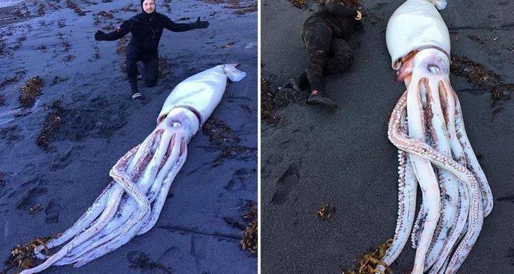 Уникальная находка: братья-дайверы нашли гигантского кальмара