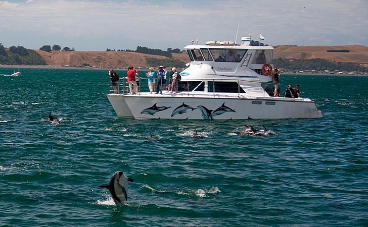 Киты и дельфины в Кайкоура