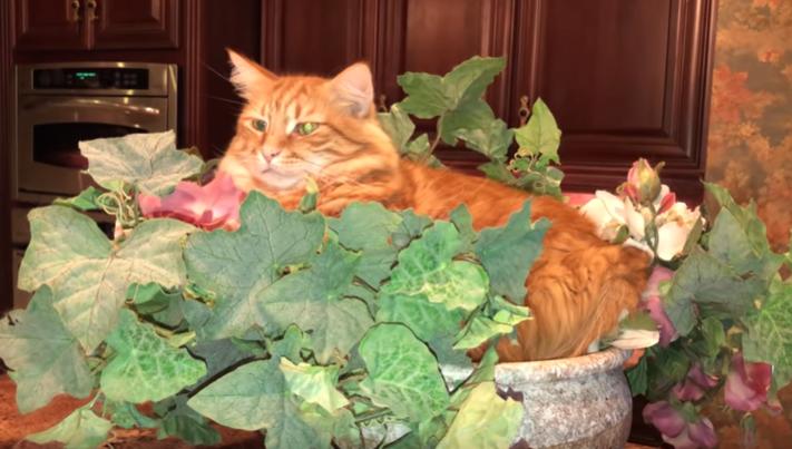 Уснувший в цветочном горшке кот покорил пользователей Сети