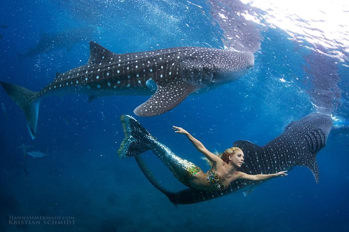 Шоу русалки Ханны с акулами и дельфинами!