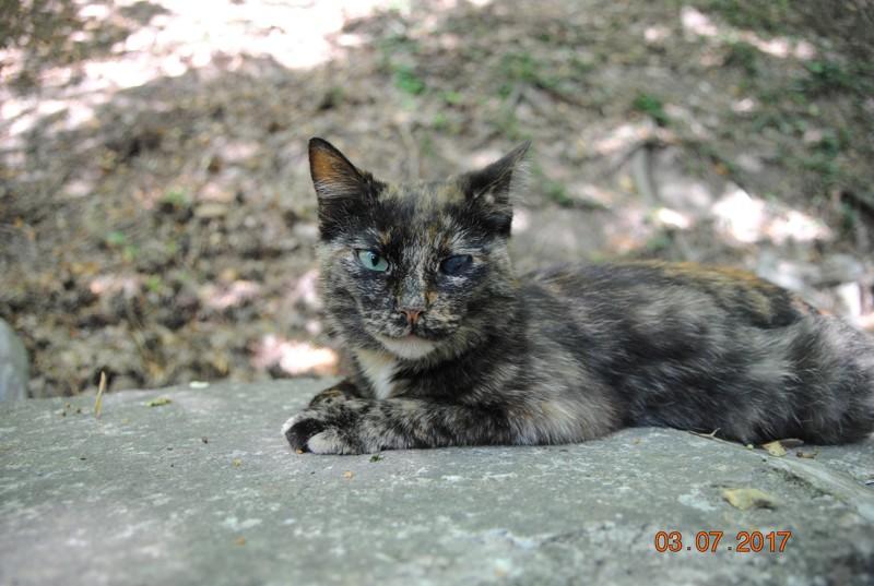 Добавим котика с Ай-петри Путешествия на машине, крым, отдых