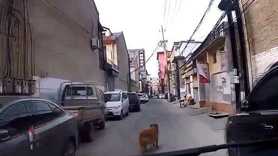 Верный пёс не бросил умирающего на улице хозяина и сам привёл к нему врачей