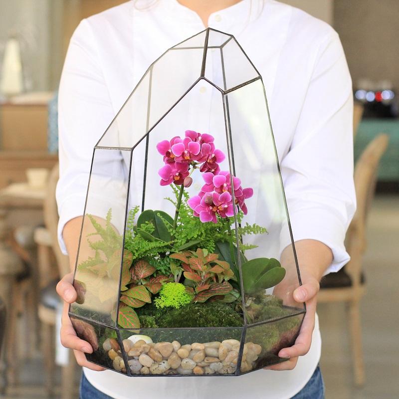 Пересадила орхидеи необычным способом…