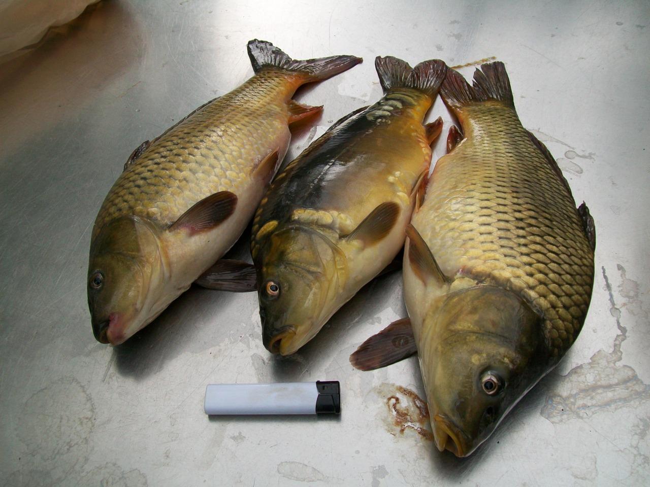 Библиотека Рыболовство Рыбоводство.