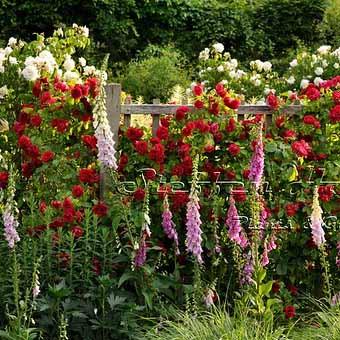 Заборы с цветами