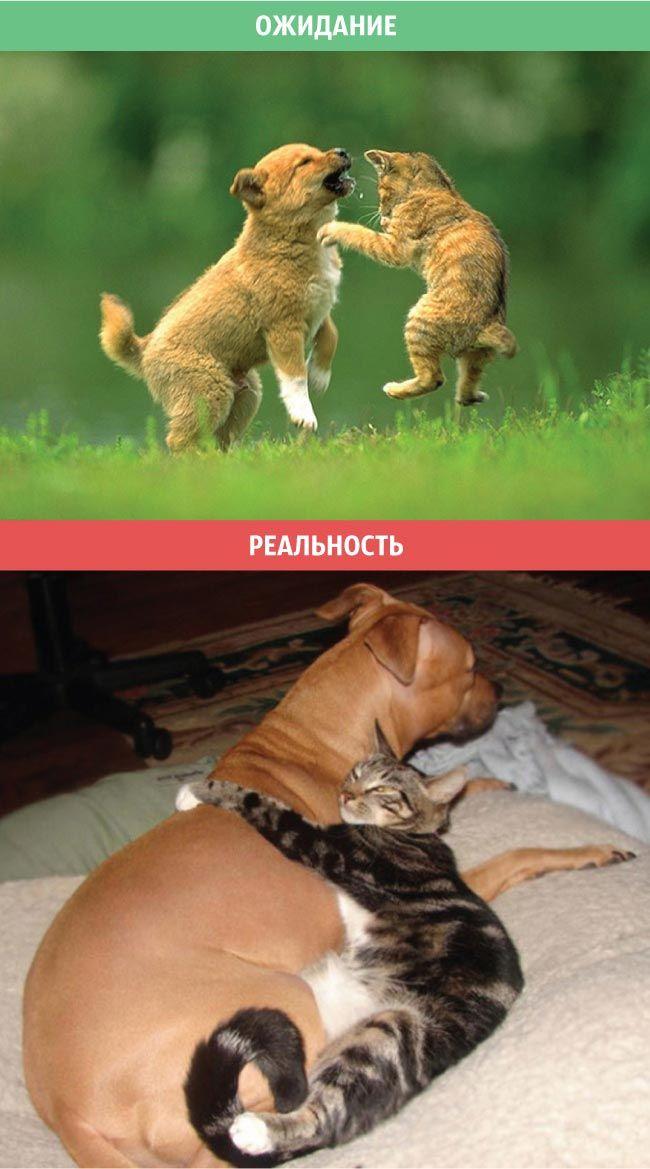 О жизни с котом))) Пост хорошего настроения))