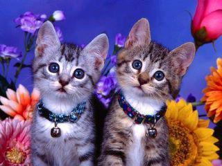 Что и как лечат кошки