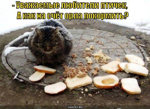 орла покормить?