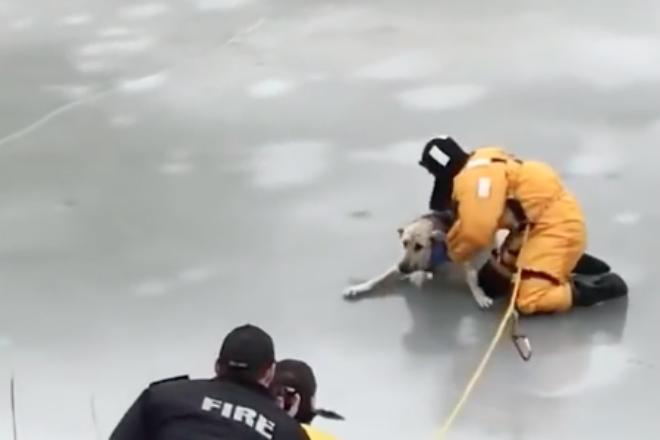 Герой-пожарник рискует жизнью спасая собаку на тонком льду