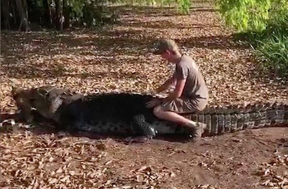 Биолог оседлал гигантского крокодила