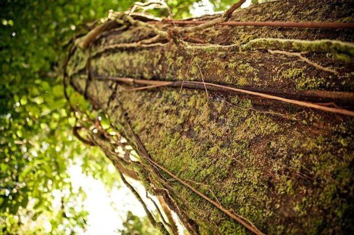 Деревня на деревьях - фото 12