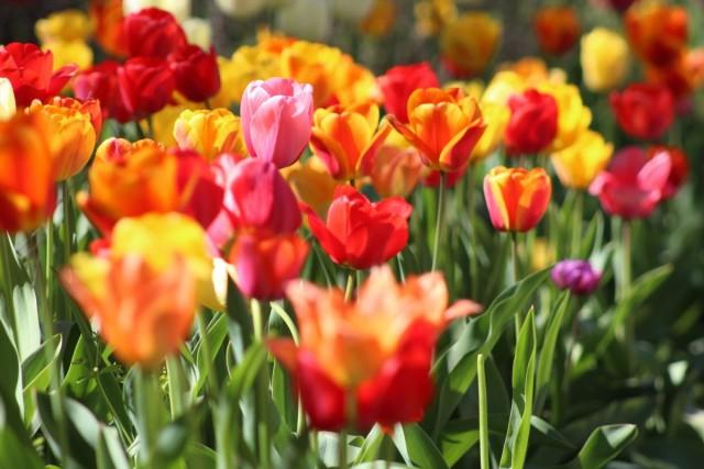 Как вырастить цветы в три раза больше и крупнее?