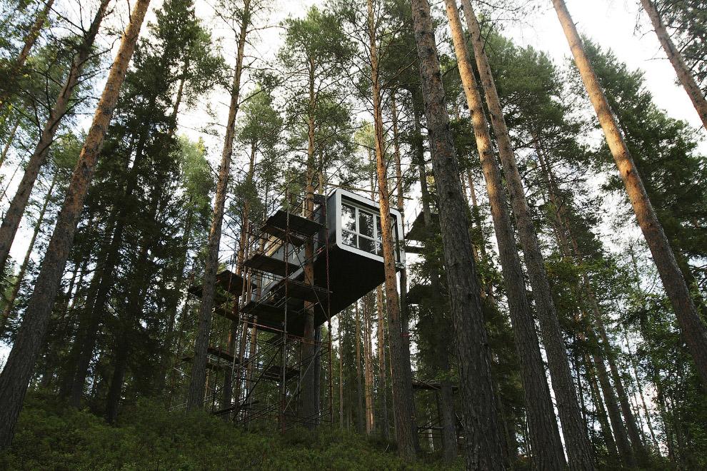 Хижина в лесу на севере Швеции