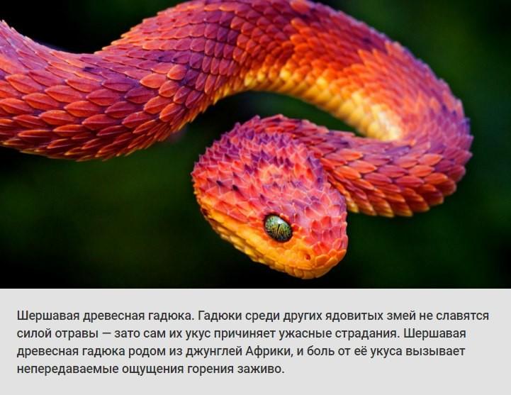 Животные и растения, способных причинить очень сильную боль боль, животные, растения, факты