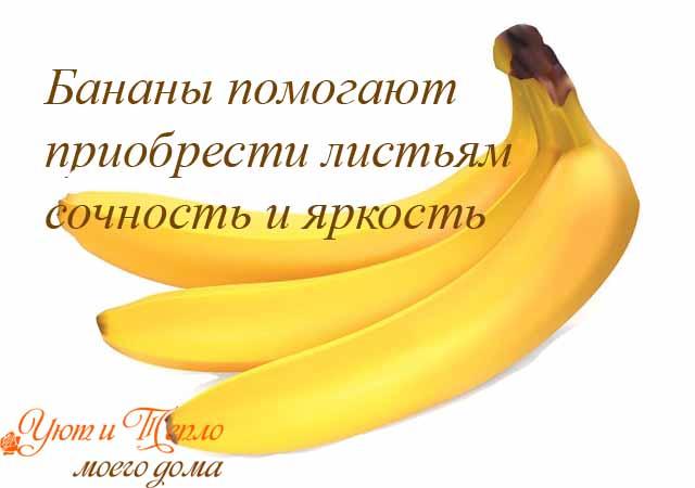 banany - horoshaja podkormka dlja komnatnyh cvetov