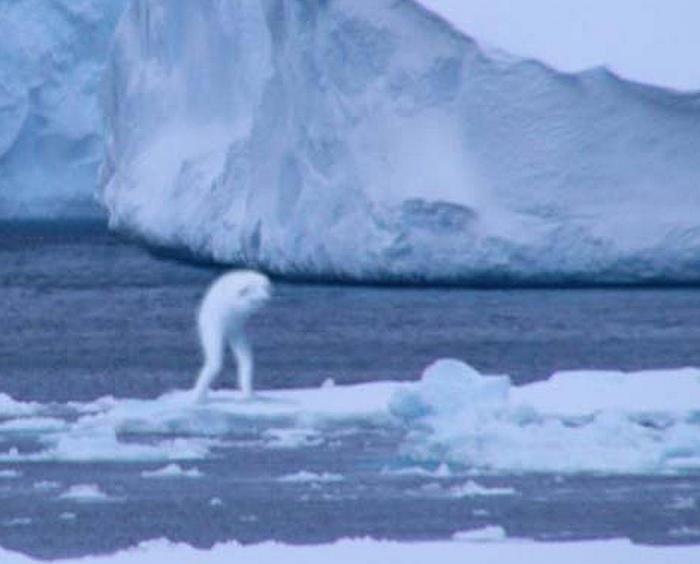 Чудовища Антарктиды - крионы…