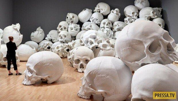 Жуткое искусство: в Австралии открылась выставка из 100 человеческих черепов
