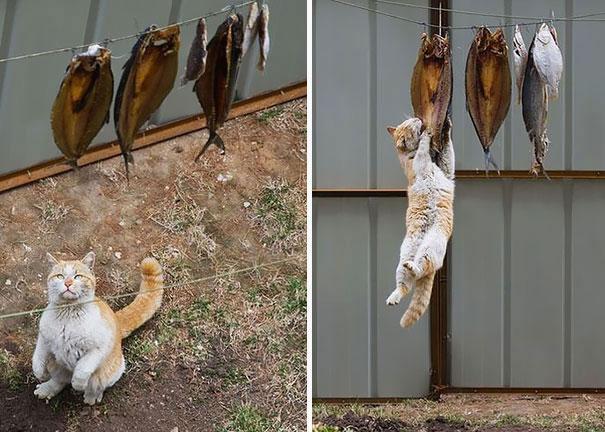 15 котов-воришек, попавшихся с поличным