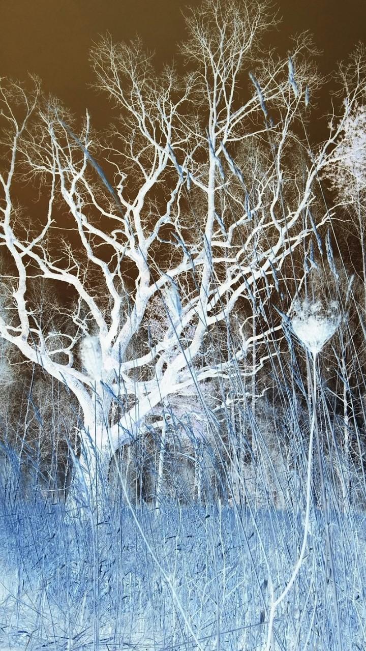 Зима времена года, природа, юрмала