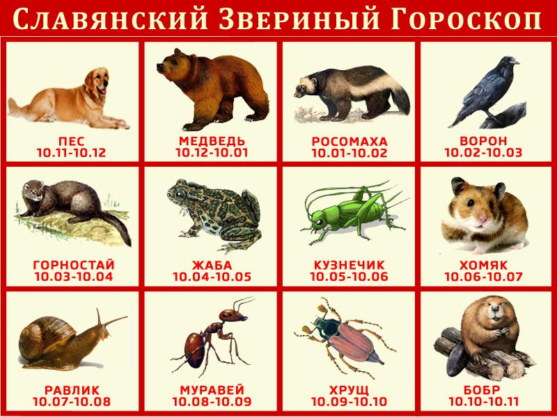 Славянский Звериный Гороскоп гороскоп, звери, славяне
