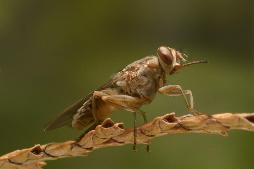 8 самых опасных для человека насекомых планеты