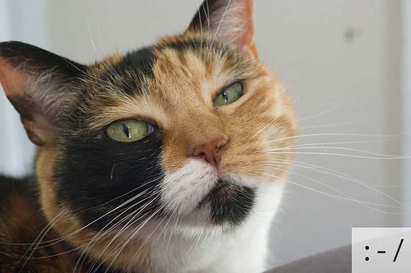 catsmiles 9 Кошачьи смайлики