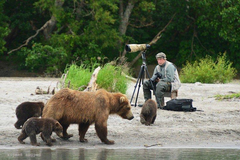 На медведя с фотоаппаратом