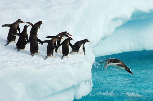 Дроздов рассказал о судьбе пингвинов с отколовшегося гигантского айсберга