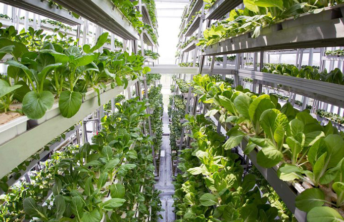 Автоматизированная вертикальная ферма будет давать в 350 раз больший урожай