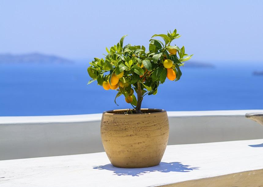 8 комнатных растений, которы…