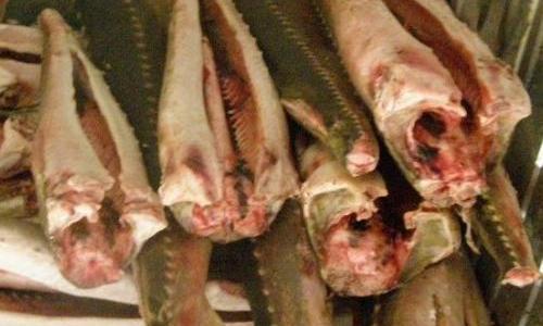 Когда покупатель не виноват: в Астраханской области задержаны браконьеры