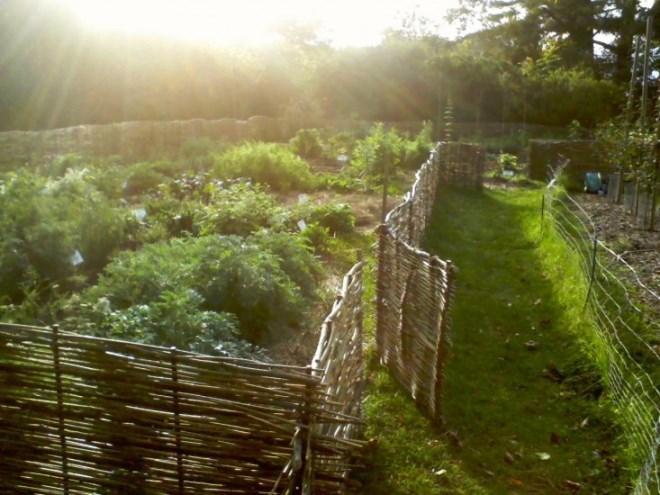 плетень на заборе