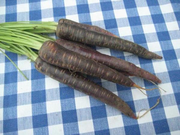 Черная морковка – русский женьшень на простой грядке