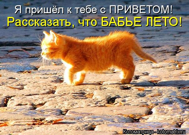 kotomatritsa_NA (604x431, 80Kb)