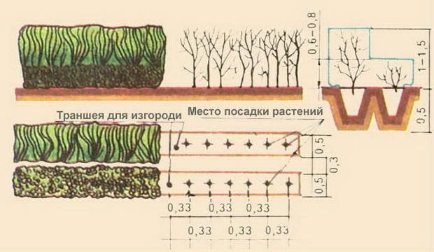 Разнообразие растений для кр…