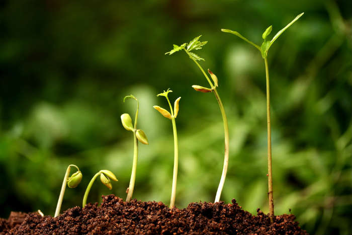 New life-Plant growth из FocalPoint, Роялти-фри стоковое фото #18857062 на Fotolia.ru