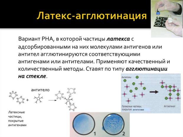 Реакция латекс-агглютинации ротавируса