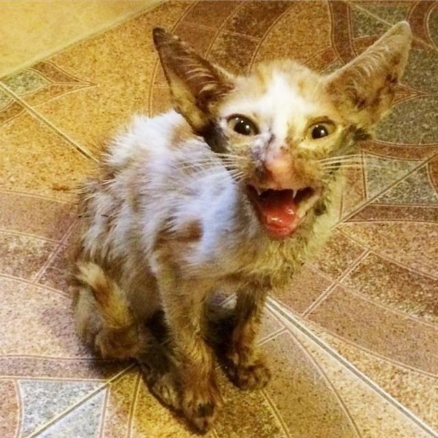Ветеринар хотел усыпить его,…
